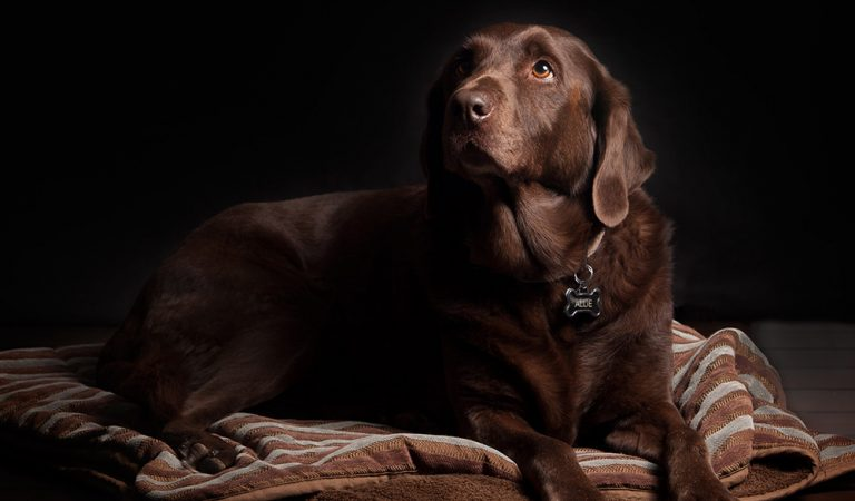 Tips for photographing pets