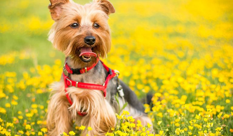 Dog Photography Tips
