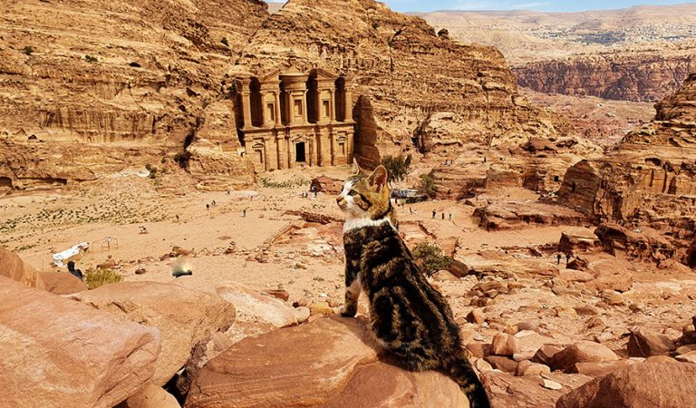 Portrait of Cat In Petra